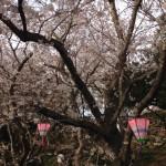 浜松城公園花見
